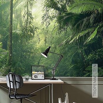 Preis:249,00 EUR - Kollektion(en): - Grüne Tapeten - FotoTapete