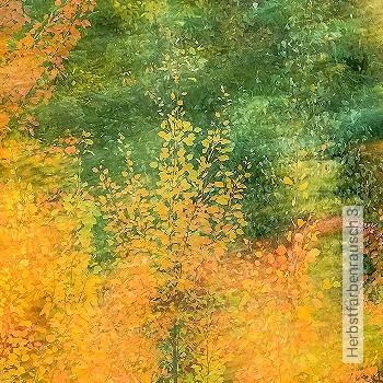 Preis:405,00 EUR - Kollektion(en): - Orange - FotoTapete