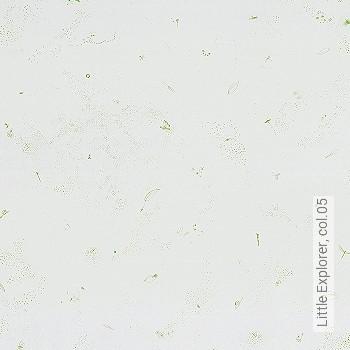 Price:53,54 EUR - Kollektion(en): - Wallpaper for children
