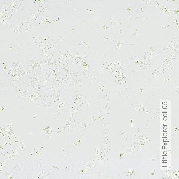 Price:53,54 EUR - Kollektion(en): - green