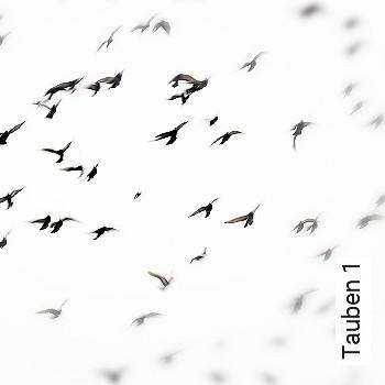 Tauben 1