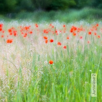 Preis:343,00 EUR - Kollektion(en): - Gras