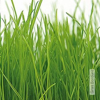 Preis:49,98 EUR - Kollektion(en): - Gras