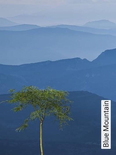 Blue-Mountain-Bäume-FotoTapeten-Blau-Weiß