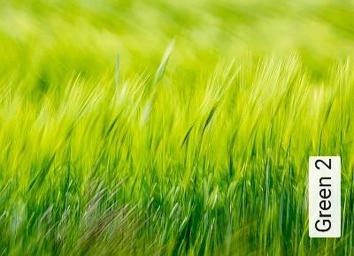 Green-2-Blumen-Landschaft-Gras-Florale-Muster-FotoTapeten-Rot-Grün