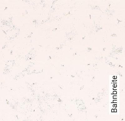 Little-Explorer,-col.03-Tiere-KinderTapeten-Braun-Rosa