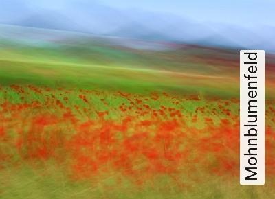 Mohnblumenfeld-Blumen-Landschaft-Gras-Florale-Muster-FotoTapeten-Rot-Grün