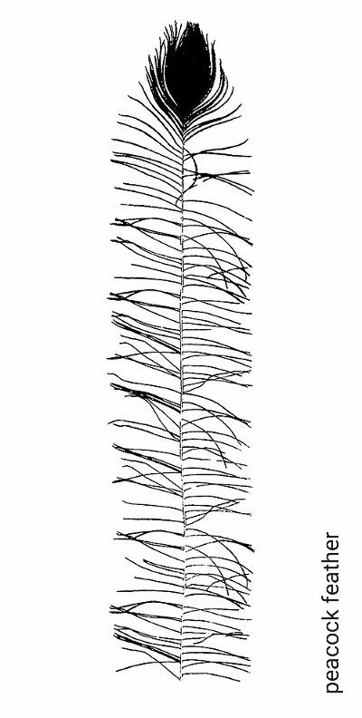 peacock-feather-Federn-Schwarz-Weiß-Schwarz-und-Weiß