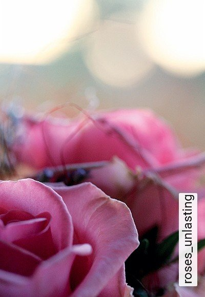 Bild: Tapeten - roses_unlasting