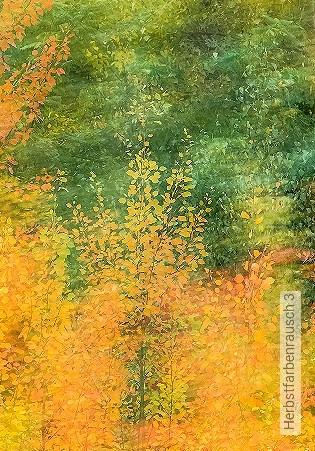 Bild Tapete - Herbstfarbenrausch 3