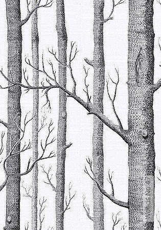 Bild Tapete - Woods No.47