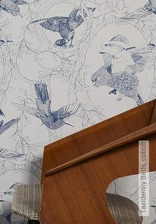 Bild Tapete - Taxidermy Birds, cobolt