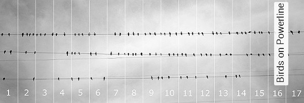 tapete birds on powerline panoramic images die tapetenagentur. Black Bedroom Furniture Sets. Home Design Ideas