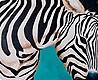 - Zebra, groß