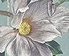 - Magnolia Frieze, col. 2