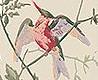 - Hummingbirds, col.71