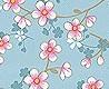 - cherry blossom, col.01