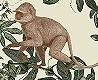 - Jungle Ape, col.02