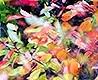 - Herbstfarbenrausch 4