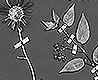 - Botanicals, pearl grey
