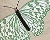 - Farfalla, col. 03