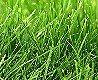 tapagentur_shutterstock_70388440 - peace of garden 07