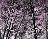 tapagentur_shutterstock_70388440 - forrest viloet